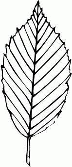 Animated Coloring Pages Leaf Image 0010