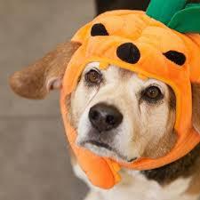 Shake Dem Halloween Bones Book by Top 10 Popular Pet Costumes For Halloween Star2 Com
