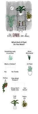 51 trendy pflanzen im schlafzimmer zimmerpflanze wohnzimmer