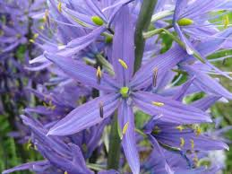 31 best gardening pacific nw plants images on