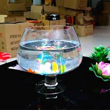 le nouveau transparente blanc écologique haute pied goldfish