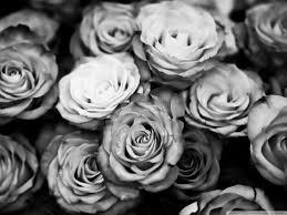 Roses Tumblr Black And White