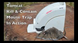 tom cat mouse trap tomcat contain mouse trap in with motion cameras