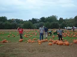Pumpkin Picking Nj Colts Neck by Eastmont Orchards Colts Neck Nj