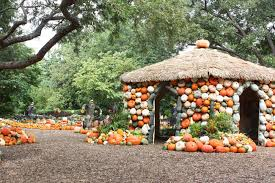 Real Pumpkin Patch Dfw by Pumpkin Village Real Life Notes