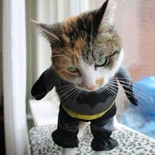 cat batman costume 27 cat costumes that will make your day brit co