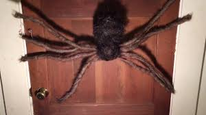 Halloween Inflatable Spider Archway by Animated Lighted Spider Lowes Gemmy Halloween Prop Review