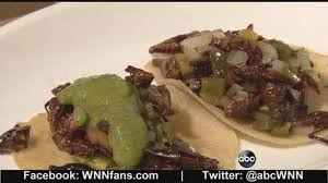 abc cuisine insect cuisine could become future food staple