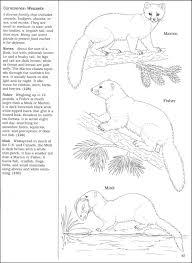 Peterson Field Guide Color In Book Mammals