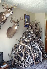 best 25 shed antlers ideas on pinterest deer decor country man