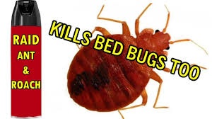 How I rid Bed Bugs Raid Ant & Roach Spray zaps them instant