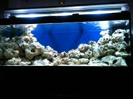 juwel 400 marine at aquarist classifieds