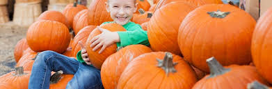 Rombachs Pumpkin Patch Hours by St Louis Pumpkin Patches Stlparent Com