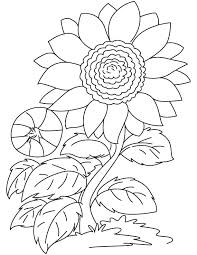 Sunflower Coloring Pages Red Page Download Free Simple