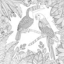 Livre De Coloriage Toucan Et Fond Illustration De Vecteur