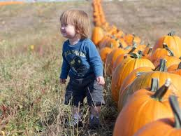 Pumpkin Picking In Ct by Where To Pick Your Own Pumpkins In Fairfield County Stratford