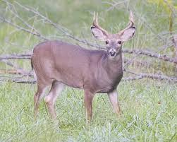 Halloween Millionaire Raffle Pa by Rifle Deer Season Opens Sports Tiogapublishing Com