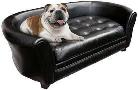 dog sofas couches