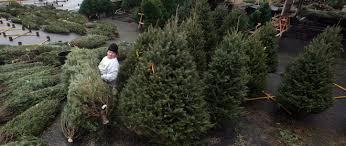 Aspirin Keep Christmas Trees Alive by Water Your Christmas Tree