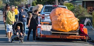 Lumpkin The Pumpkin Book by In Half Moon Bay Weighing U0027the Great Pumpkin U0027 U2013 Orange County