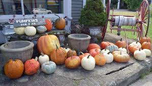 Kc Pumpkin Patch Winery by Guide To Pumpkin Picking In Kansas I Love Halloween