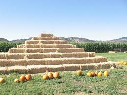 Stanly Lane Napa Pumpkin Patch by 5 Pumpkin Patches To Visit With Your Family Suisun City Ca Patch