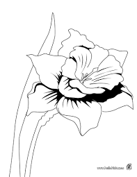 Iris Details Coloring Pages
