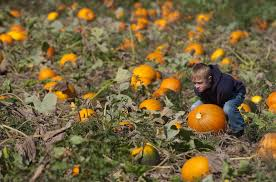 Bishops Pumpkin Farm Employment by Tim U0027s Pumpkin Patch Home