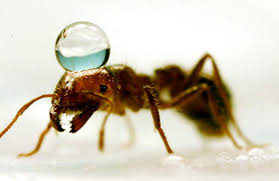 Bad Eggs Do They Float Or Sink by How To Destroy A Floating Fire Ant Colony The Washington Post