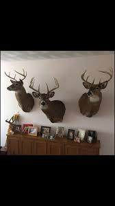 Moose Shed Antler Forums by Rattling