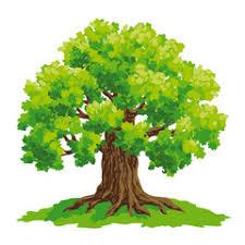 Oak tree vector drawing