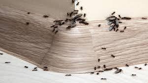 ameisen im haus bekämpfen was kann gegen ameisen tun