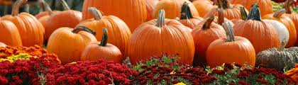 Pumpkin Picking Near Lancaster Pa by Welcome To Strawberry Acres Pick Your Own Fruits Farm