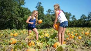 Pumpkin Picking Pa by Fun Fall Activities On Long Island