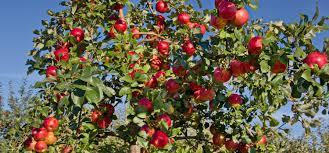 Nj Pumpkin Picking by Fall In North Jersey Apples Pumpkins Hayrides Best Of Nj Nj
