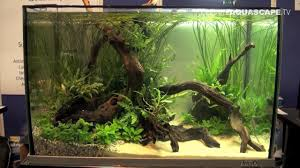Aquascaping - Aquarium Ideas From Aquatics Live 2012, Part 4 - YouTube Out Of Ideas How To Draw Inspiration From Others Aquascapes Aquascaping Aquarium The Art The Planted Plant Stock Photo 65827924 Shutterstock Continuity Aquascape Video Gallery By James Findley Green With River Rocks Aqua Rebell Qualifyings For 2015 Maintenance And Care Guide Outstanding Saltwater Designs 2012 Part 1 Youtube Dennerle Workshop Fish