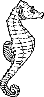 Download Coloring Pages Seahorse The Anatomy Of Page Kids Play Color