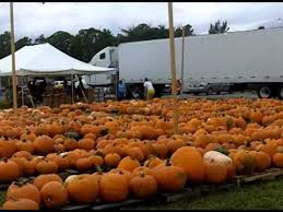 Moriarty Pumpkin Patch by Community Of Hope Pumpkin Patch Youtube