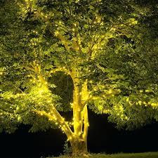 Tree Wrap Lights Outdoor Christmas