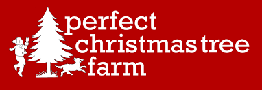 Leyland Cypress Christmas Tree Farm by Deck The Trees With Jewels And Baubbles Christmas Ideas