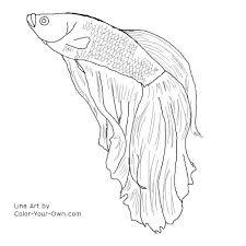 Betta Fish Line Drawing