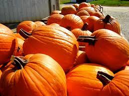Pumpkin Patch Nw Arkansas by In Toon Pumpkin Patch U0026 Corn Maze