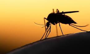 ohne chemie gegen mücken co was leisten günstige