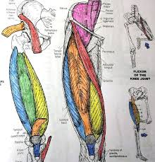 The Anatomy Coloring Book Elegant Netter Netters Page