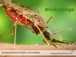 mückenplage bekämpfen hausmittel gegen stechmücken in der