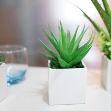 plante de bureau plante de bureau livraison zamioculcas en bac à réserve d eau la