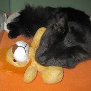 burke animal clinic burke veterinary clinic 39 reviews veterinarians 6401