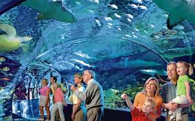 Ripley's Aquarium In Myrtle Beach, SC
