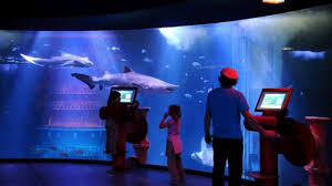 grand aquarium de malo malo des animations gratuites au grand aquarium