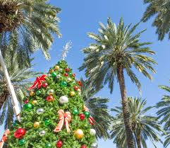 A Photo Of Christmas Tree Outdoors In Miami